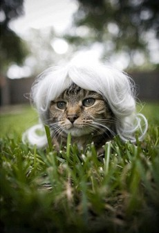 Pinterest's Most Fashion-Forward Cats
