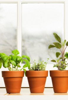 Home Grown: 7 Grow-On-Your-Windowsill Herbs for Restaurant Worthy Dishes