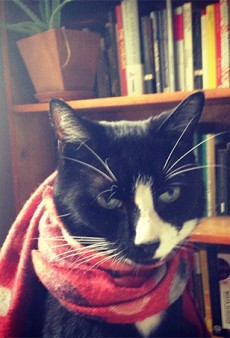 9 Ridiculously Stylish and Adorable Cats Wearing Clothes