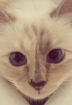 Link Buzz: Karl Lagerfeld's Cat Gets a Beauty Campaign, Tory Burch Has a New Beau