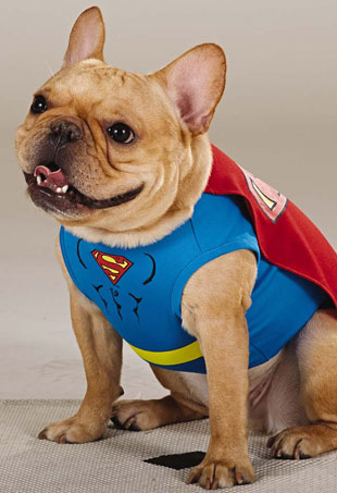 superdog-p
