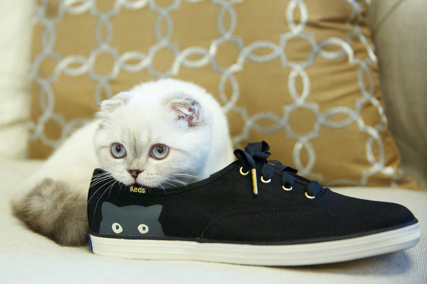 Taylor Swift's cat pictured with Keds shoes