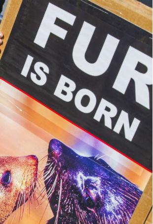 fur-protest-p