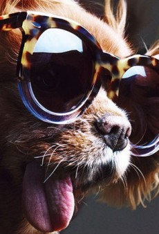 Toast the Dog Is Karen Walker's Latest Campaign Star