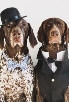 Best in Show: 24 Instagram Pets Who Have a Better Wardrobe than We Do