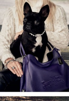 Lady Gaga's Dog Miss Asia Kinney Stars in Coach's Latest Campaign