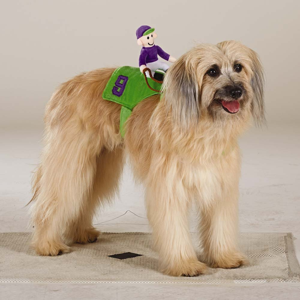 Jockey Rider & 47 Halloween Costumes for Your Dog - theFashionSpot