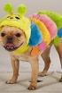 Caterpillar Pup