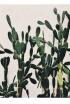 Subdued Cactus