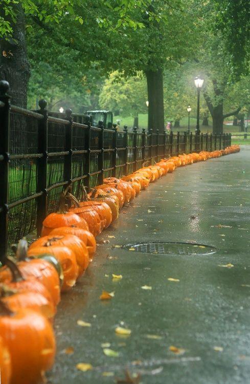Pumpkins, All in a Row