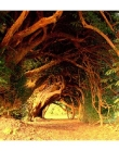 Coolest Ancient Tree Tunnel
