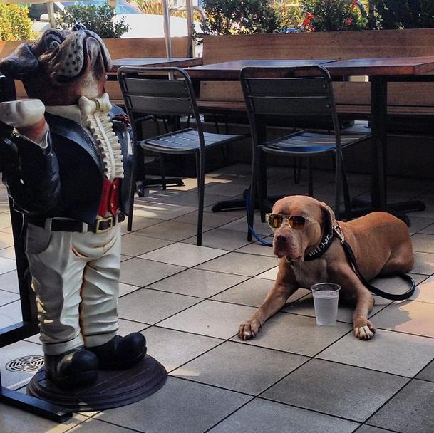 Ashley Benson's Dog Days