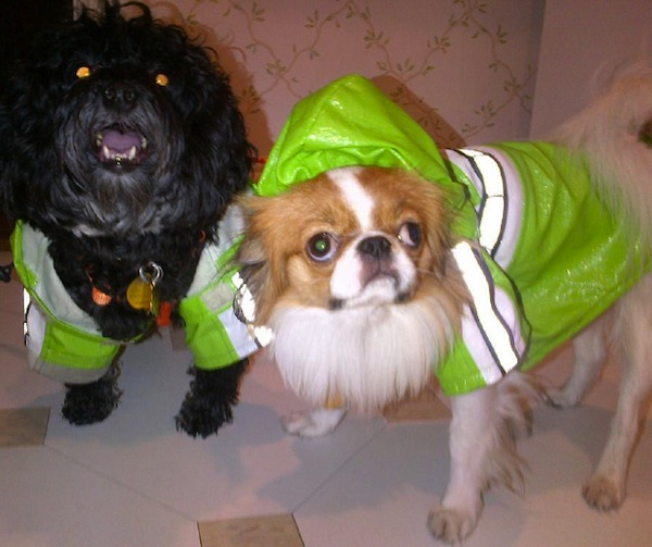 Joan Rivers Waterproofs the Dogs