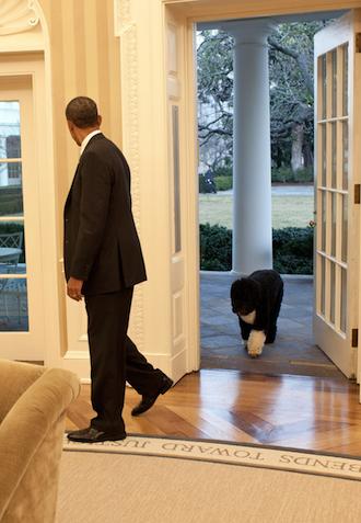 Obama Bo